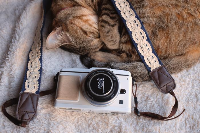 160419猫とカメラ